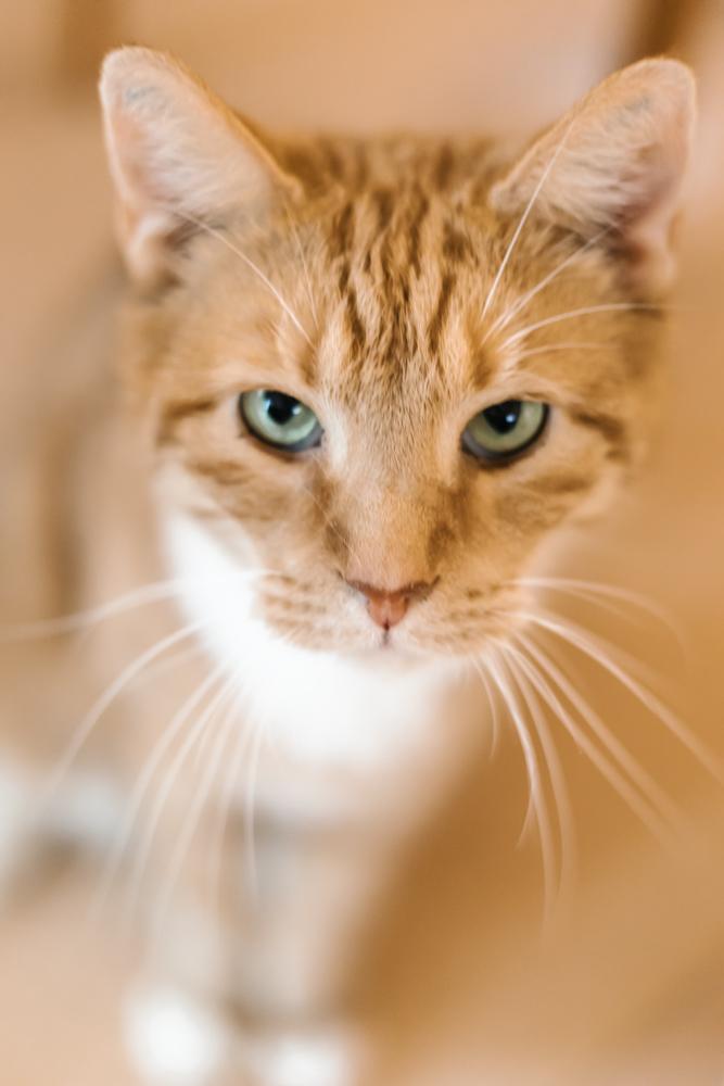 nyfoedt-fotografering-august-kat